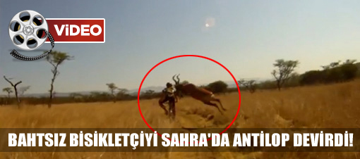 Antilop Bisiklet S�r�c�s�ne �arpt�